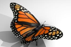 ButterflyRender12