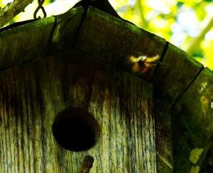 BirdhouseHive01