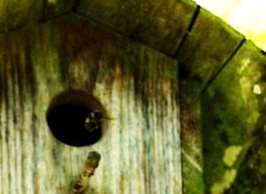 BirdhouseHive04